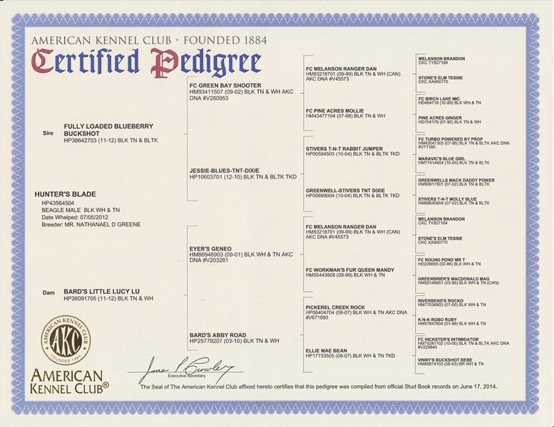 Pedigrees of AKC register Beagles